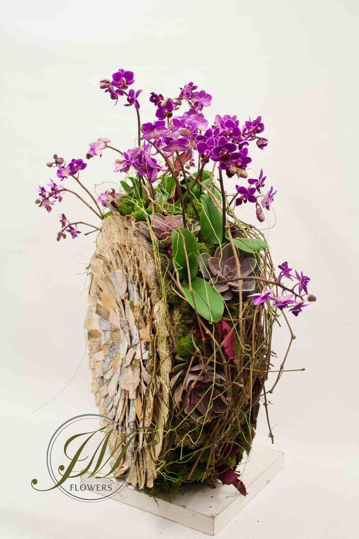 Vip these de lite ful orchid designs include 9 designs which can be - Mini Orchid And Succulents Planted Arrangement