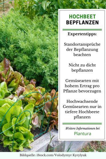 Hochbeet Bepflanzen Pflanzplan Mischkultur Grundungung Garten