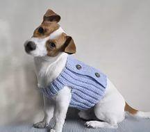 örgü köpek kıyafetleri yapılışı: Yandex.Görsel'de 8 bin görsel bulundu