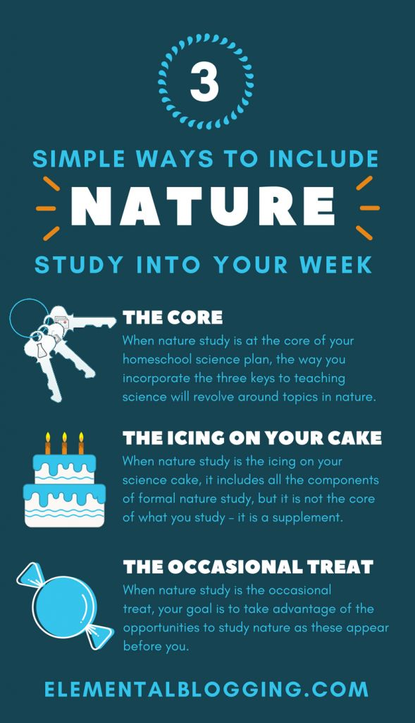 3 ways to help you add a bit of natural science study into your homeschool plans.