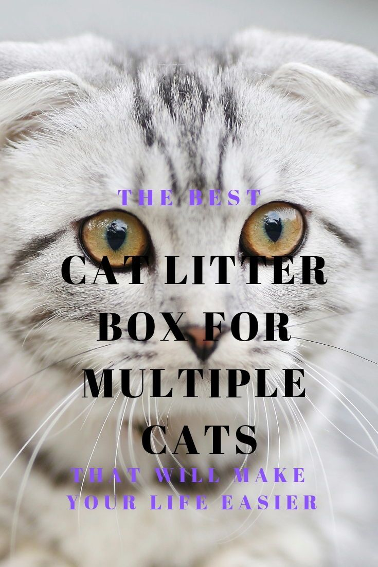 The Best Litter Box For Multiple Cats That Will Make Your Life Easier The Cat Mama Best Cat Litter Funny Cat Images Best Litter Box