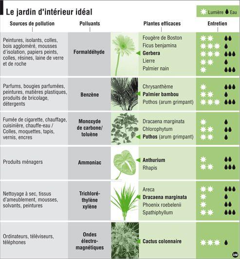 Mieux respirer grâce aux plantes dépolluantes