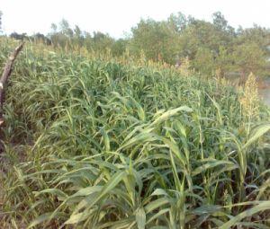 Volgroeid gras in soil bag | Favoraid