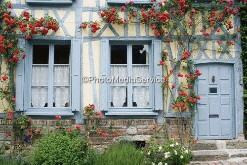 Half-timbered house with climbing rose