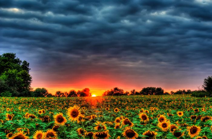 11. Before our perfectly Kansas day comes to an end, let's pick a sunflower...