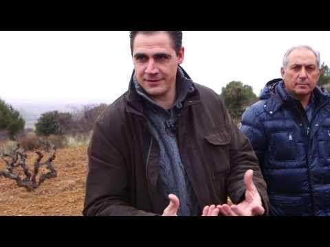 Entre viñas viejas (Dominio de Cair) - Todovino.com