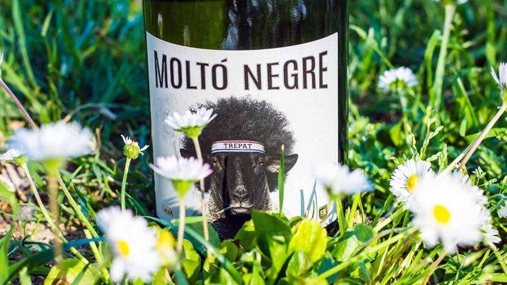 Molto Negre Cava vino spagnolo, recensione commento e prezzo