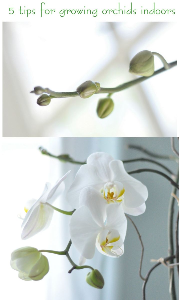 "Tips for growing orchids! @Beverly Tom I need this! haha (p.s. my ""dead"" orchid I bought has new blooms! finally! woo hoo!)"