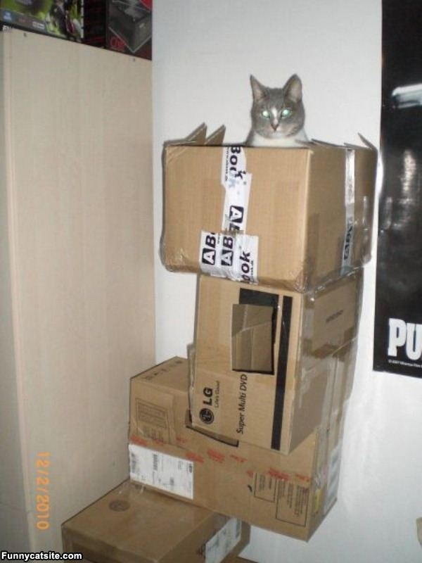 cheap home made cat tower