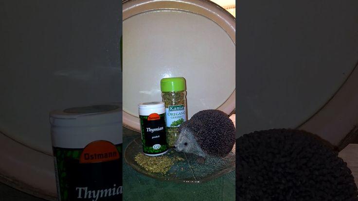 Naturheilmittel gegen Bronchitis und Verschleimung - Brustwickel mit Thy...