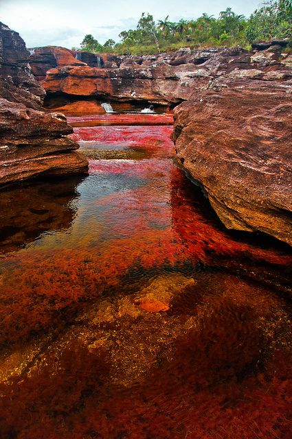 Caño Cristales. #Colombia #SoyColombiano