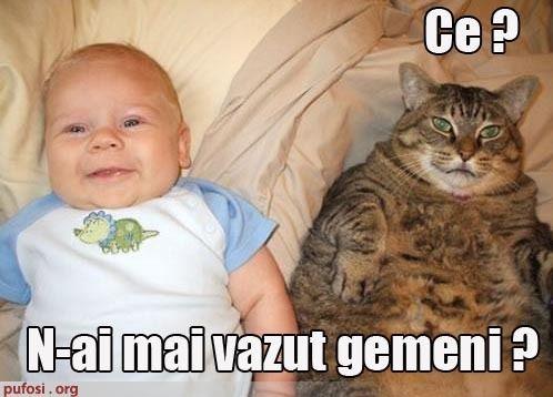 poze-amuzante-poza-amuzanta-pisica-crede-ca-este-fratele-geaman-al-unui-bebelus - poze pisici haioase