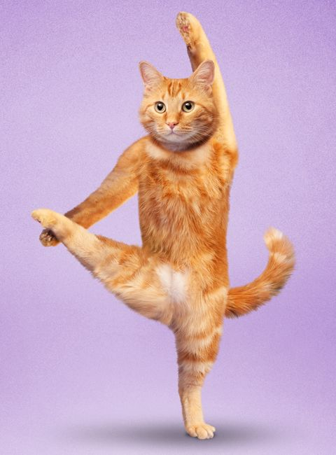 Ring In The New Year With This Pawesome Yoga Cats Calendar!  #InStyle