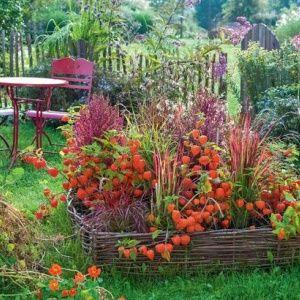 Бордюры для цветов