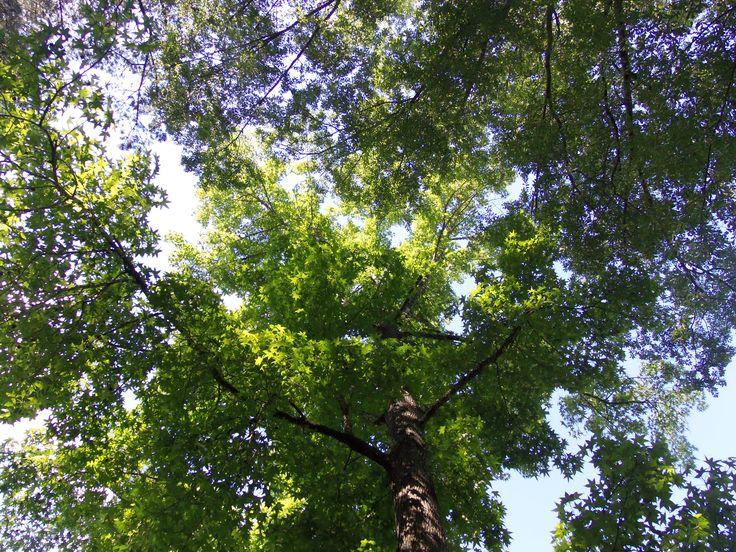trees summer alaska - photo #30