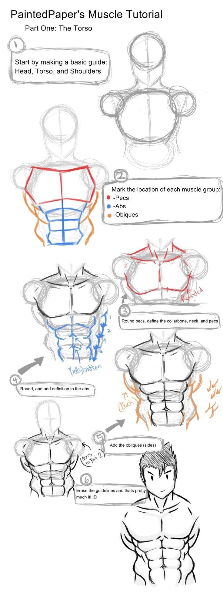 best 25 anatomy drawing practice ideas on pinterest anatomy