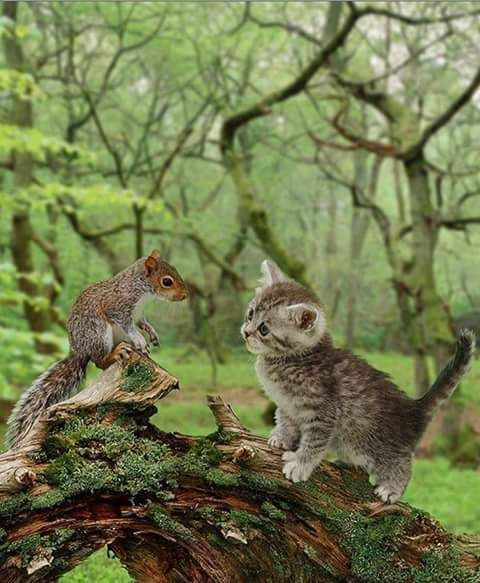 hello! ..what are you?  I'm a kitten.....I'm a squirrel..lets become play mate... it's really great fun climbing up trees. Oh! yes..... CUTE.