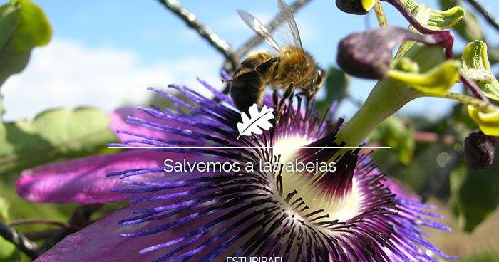 Todo lo que deberías saber sobre la desaparición de las abejas. ¿Qué son? ¿Por que están desapareciendo las abejas? ¿Qué puedes hacer para salvarlas?