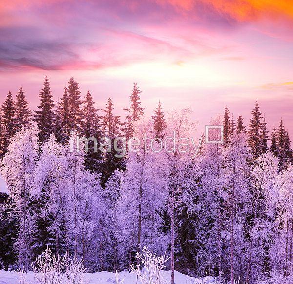 이미지투데이 겨울 산 풍경 하늘 나무 가지 눈꽃 풍경사진 imagetoday winter mountain sky tree wood branch photo
