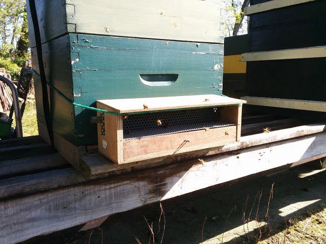 Over Bessen, Fruit en Bijen: Stuifmeel korrels oftewel bijenpollen oogsten van ...