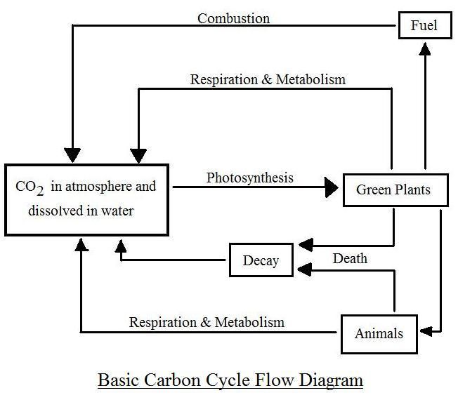 Simple Carbon Cycle Diagram