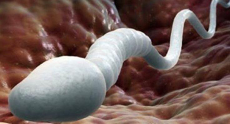 Wetenschappelijk bewezen: Uitspugen of doorslikken – DIT doet sperma met je lichaam