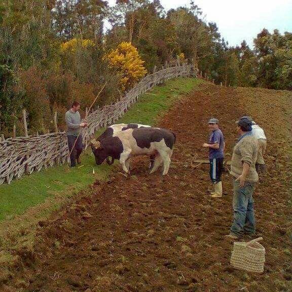 Nuestro campo. Chile.