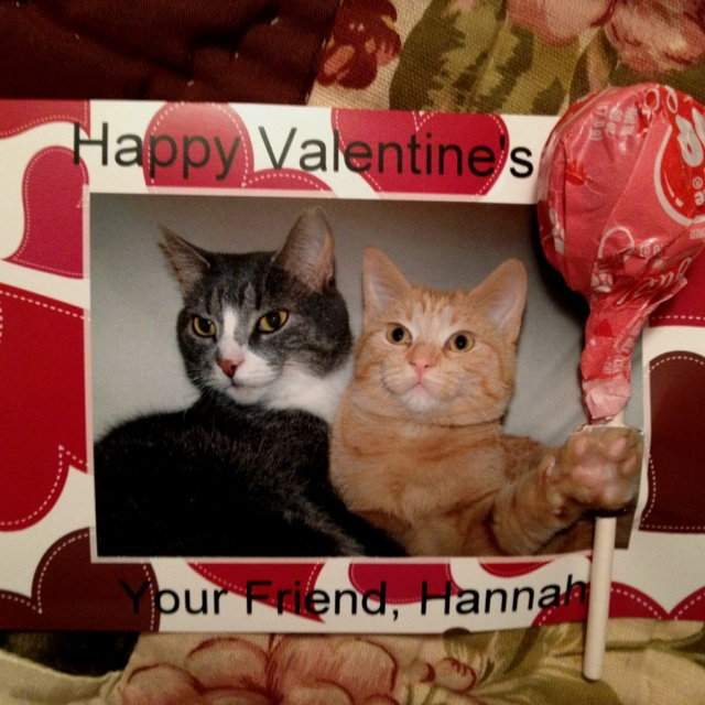 valentine's day cat wallpaper
