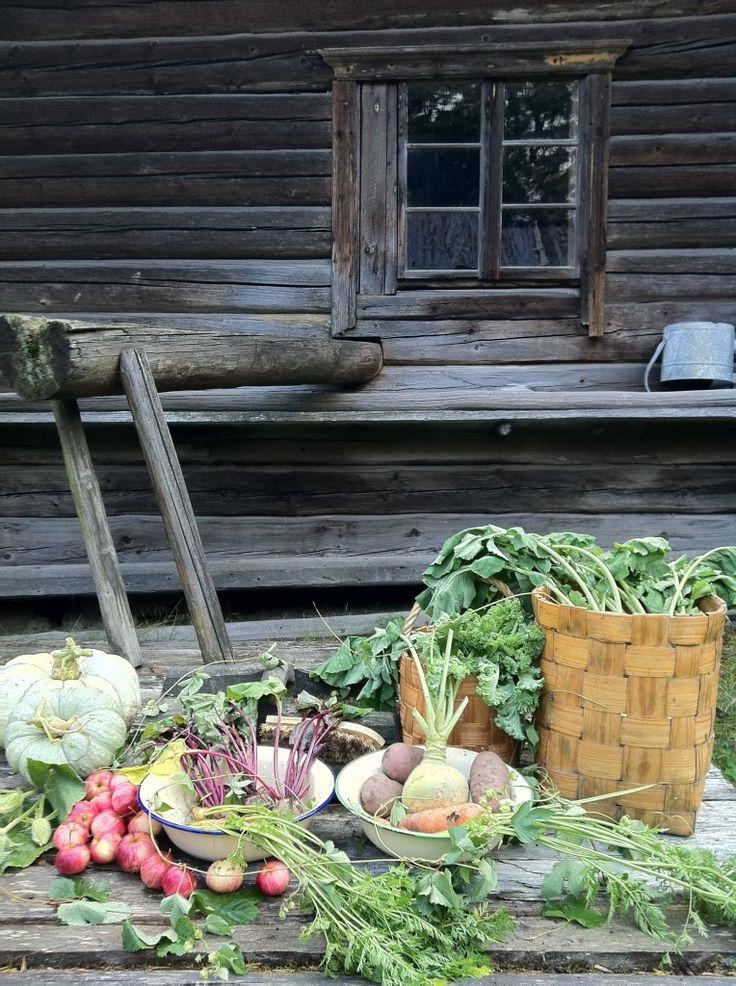 """""""Kekri oli marraskuun 1. päivä. Juhla naurispaistikkaisineen, sian, lampaan, lehmän paistineen, kehäjuustoineen ja oluvineen. Silloin oli kissaviikot ja vapaaviikot palvelijoillakin, silloin kans juhlittiin. Ja jokainen oli vapaa. Tärkeemmät vaan tehtiin."""" SKS KRA. Iitti, V. Lindberg KRK 61:358.1935-36. (Kuva: Kati Mikkola)"""