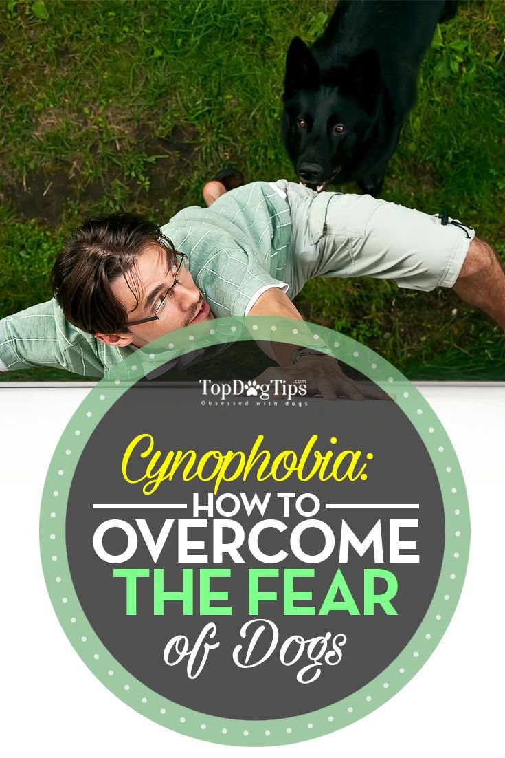 How to Overcome Fear of Dogs: Cynophobia in Adults and Children. Do you get nervous around dogs? Have you been wondering how to overcome fear of dogs? You're not alone. With the growing pet population, many people have begun to think of their fear of canines as a burden. It's hard to go anywhere without seeing a dog these days. #dogs #pets #cynophobia #fear #pets #animals #howto #advice #phobias