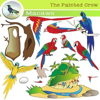 Macaw Life Cycle - Bird Clip Art Set - Parrots - 28 Piece Color and Blackline