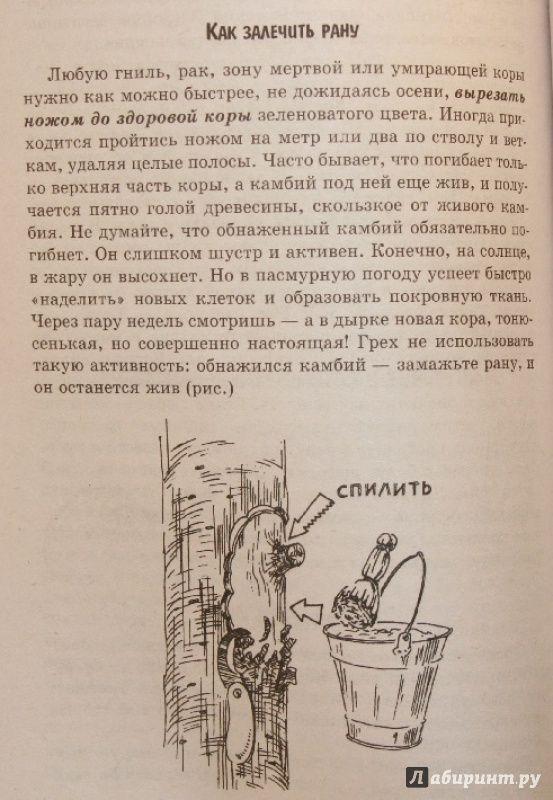 Иллюстрация 4 из 12 для Умный сад в подробностях - Николай Курдюмов | Лабиринт - книги. Источник: Остапчук  Дарья