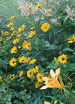 Flowers for beginners - plants that grow themselves! Or just a great list of perennials for those of us that love Peonies, Geraniums, Daylilies, Dianthus, and Black-Eyed Susans.  // Great Gardens & Ideas //