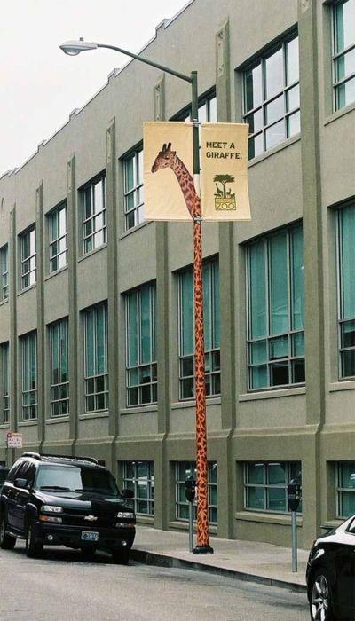 took on Giraffarama,......