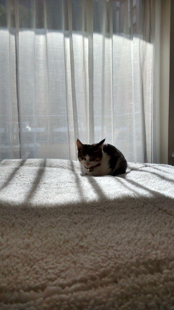 durmiendo al sol :)