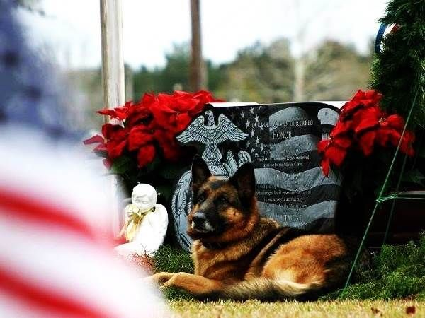 Memorial Day 2014 Images of Military Dog