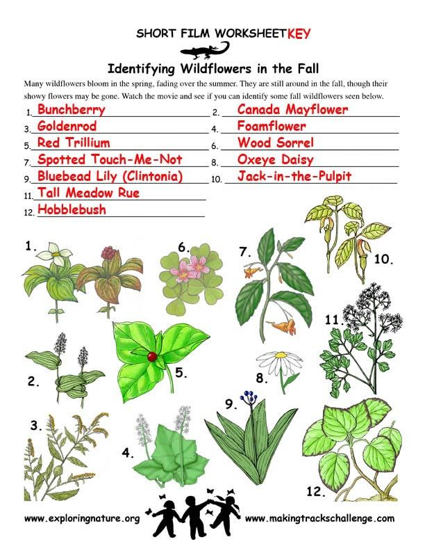 207517495303368770 on Wildflower Id Book For Kids