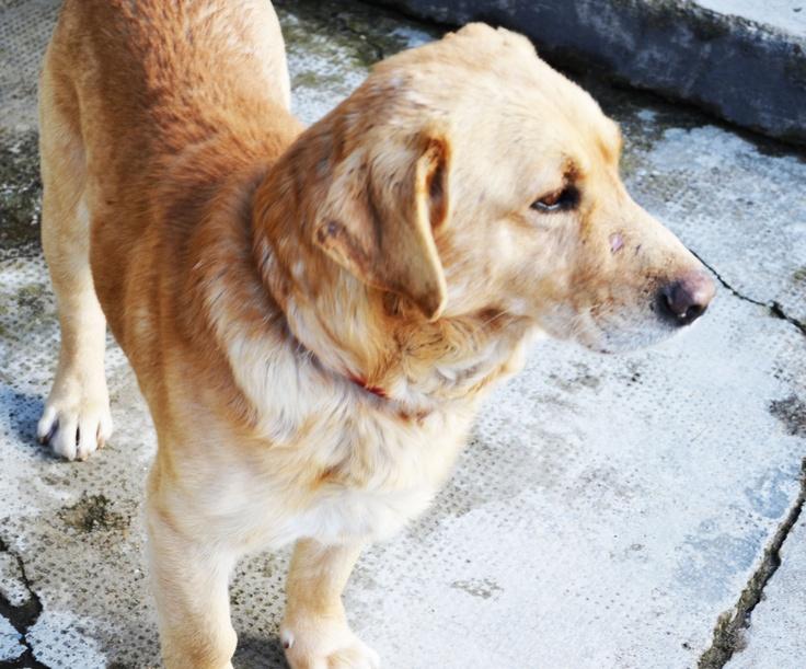My sweet dog, Max!