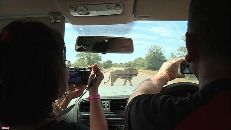 Investigatiôns. Le business des safaris. 20h45 (19:45 GMT). France Ô