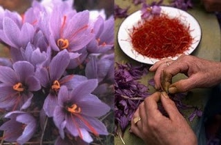 Sabias que...El azafran y la vista. The flower as compared to the final product.