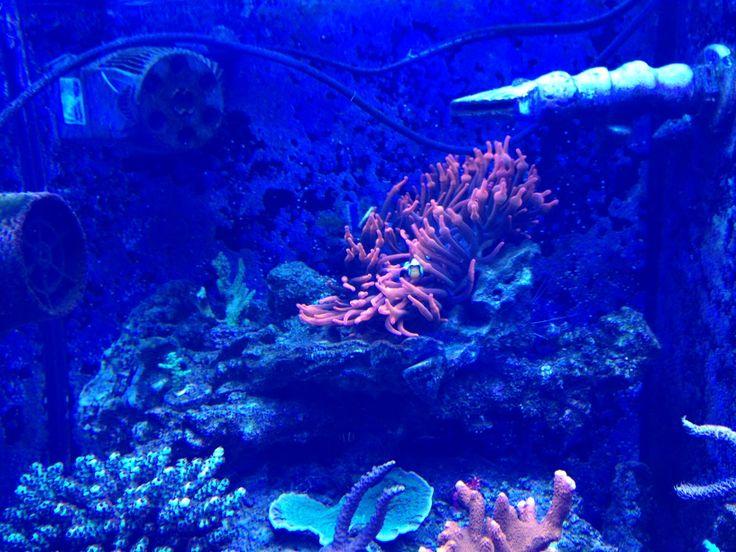 SICCE Voyager pump operating in a Marine Aquarium
