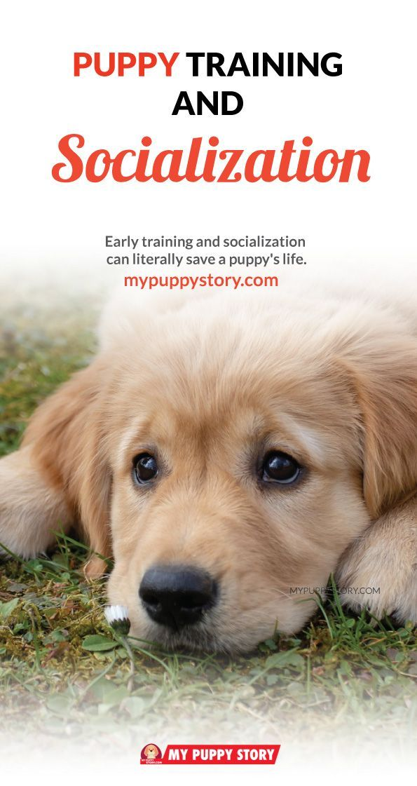 Puppy Training And Socialization It S Never Too Early To Enroll A