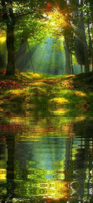 Forest Autumn Nemophilist Sanctuary Ancient Pond