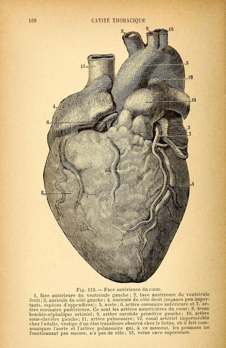 15 Best Anatomia Images On Pinterest Human Body Human Anatomy And