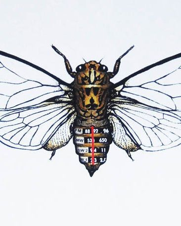 Philippa Bentley : Tuned In Cicada Art Print