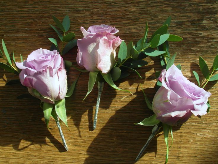 Purple buttonholes with ocean song roses and eucalyptus.