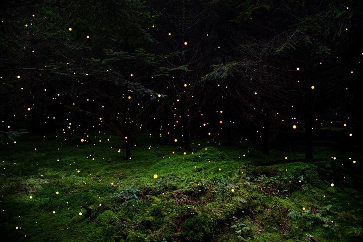Stars 5. - (Ellie Davies)