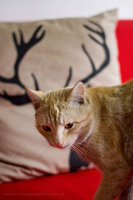 cat and moose in one persone ; )