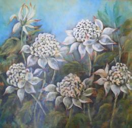 White Waratahs 1mx1m Acrylic on Canvas by Sheryl Miller