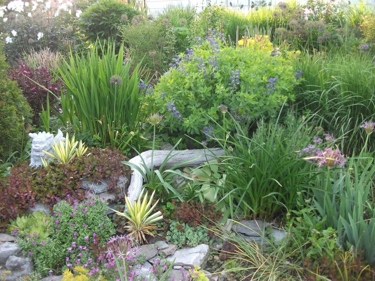"""Dry and sunny flower bed, early June. Baptisia australis, yucca """"Golden Sword"""", Crocosmia """"Lucifer"""" (leaves only). weigela """"Wine and Roses"""", aubrieta (ground cover with pink flowers. Good drought resistance. Easy care!"""